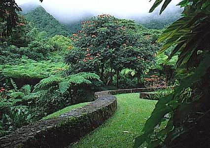 View of the rain forest